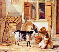 Two goats in a yard , abrahamvanstrij