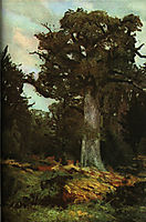 The Oak, andreescu