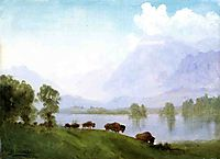 Buffalo Country, bierstadt