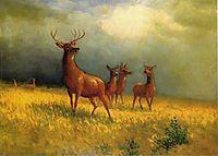 Deer in a Field, 1885, bierstadt