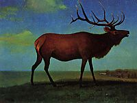 Elk, bierstadt