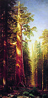 The Great Trees, Mariposa Grove, California, 1876, bierstadt