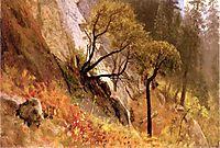 Landscape Study. Yosemite, California, bierstadt