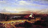 The Last of the Buffalo, 1888, bierstadt