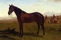 Portrait of a Horse, 1869, bierstadt