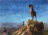 Rocky Mountain Big Horns, bierstadt