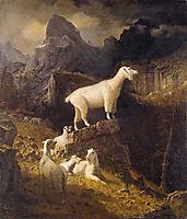 Rocky Mountain Goats, 1885, bierstadt