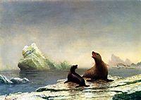 Seals, bierstadt