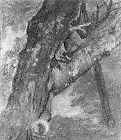 Study of a Tree, 1864, bierstadt