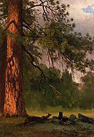 Yosemite Camp Kitchen, bierstadt