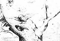 Nest of Owls, bosch
