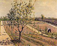 Kitchen Garden, Petit Gennevilliers, 1882, caillebotte