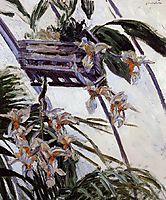 Orchids, 1893, caillebotte