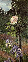 Rose with Purple Iris, Garden at Petit Gennevilliers, c.1892, caillebotte