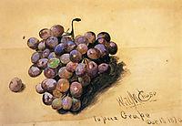 Topaz Grapes, 1870, chase