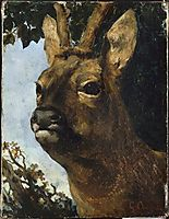 Head of a Young Doe, courbet