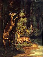 Male and Female Deer in the Woods, 1864, courbet