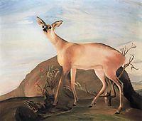 Deer, 1893, csontvary