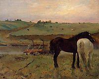 Horses in a Meadow, 1871, degas