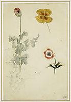 Study of Flowers, 1850, delacroix