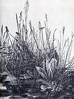 Great piece of turf study of weeds, 1503, durer