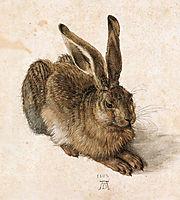 Hare, 1502, durer