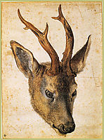 Head of a Stag, c.1503, durer