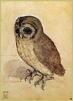 The Little Owl, 1506, durer