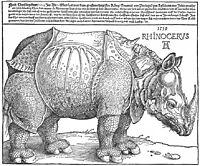 Rhinoceros, 1515, durer