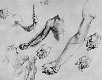 Study of male hands and arms, durer