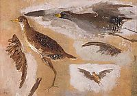 Studies of Game Birds, probably Viginia Rails, eakins
