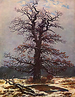 Oak tree in the snow, c.1828, friedrich