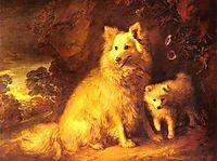 Pomeranian Bitch and Pup, c.1777, gainsborough