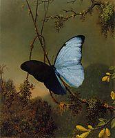 Blue Morpho Butterfly, 1865, heade