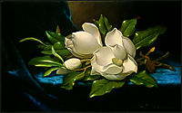 Giant Magnolias on a Blue Velvet Cloth, 1890, heade