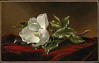 Magnolia Grandiflora, 1895, heade