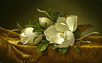 Magnolias on Gold Velvet Cloth, 1890, heade