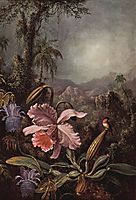 Orchid and Hummingbird, 1880, heade
