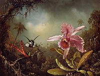 Orchid with Two Hummingbirds, 1871, heade