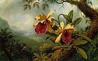 Orchids and Hummingbird, heade