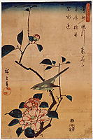 Camellia and Bush Warbler, 1844, hiroshige
