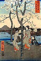 Cherry Tree, hiroshige