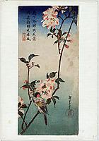 Small Bird on a Branch of Kaidozakura, 1838, hiroshige