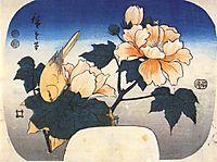 Yellow bird and cotton rose, 1852, hiroshige