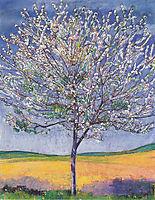 Cherry Tree in Bloom, 1905, hodler