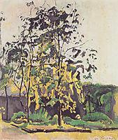 Tree in the workshop garden , 1917, hodler