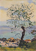 Willow tree by the lake, 1890, hodler