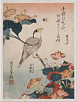 Grosbeakandmirabilis, 1834, hokusai