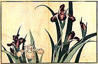 Irises, hokusai