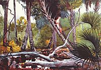 In the jungle, Florida, 1904, homer